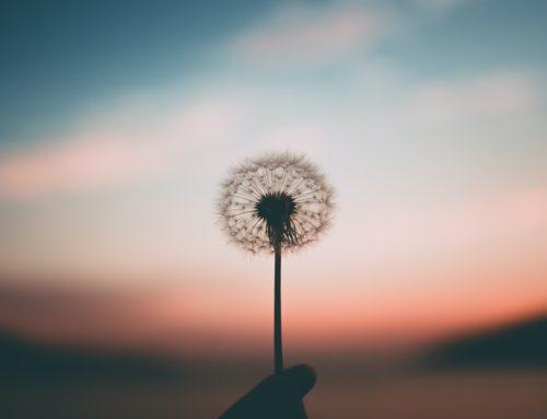 El secreto de Mindfulness está en la Intención