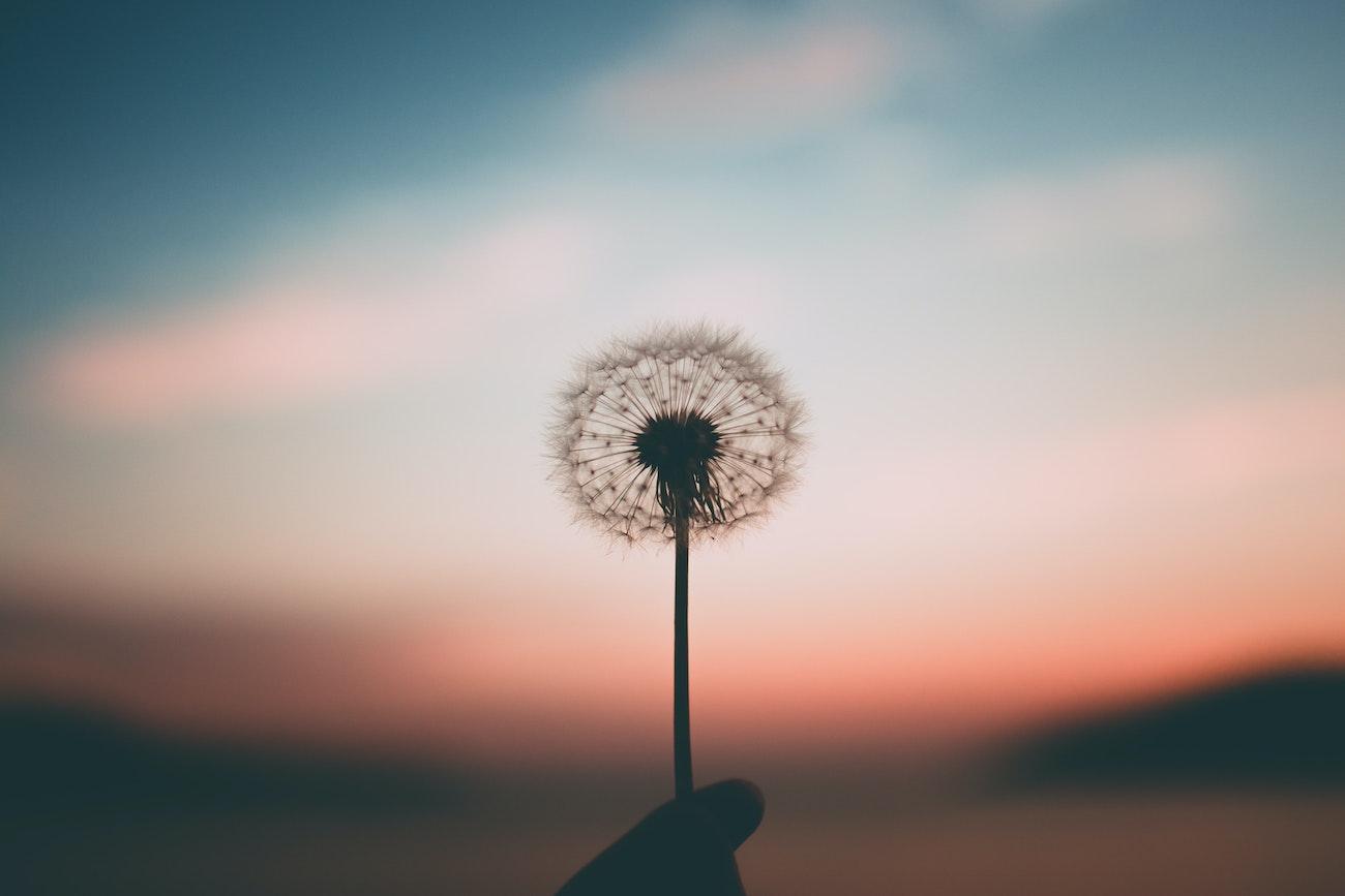 el secreto de mindfulness